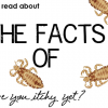 The Facts of Lice